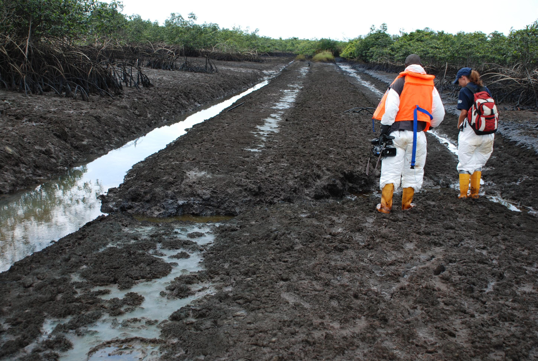 Image result for ogoni clean up