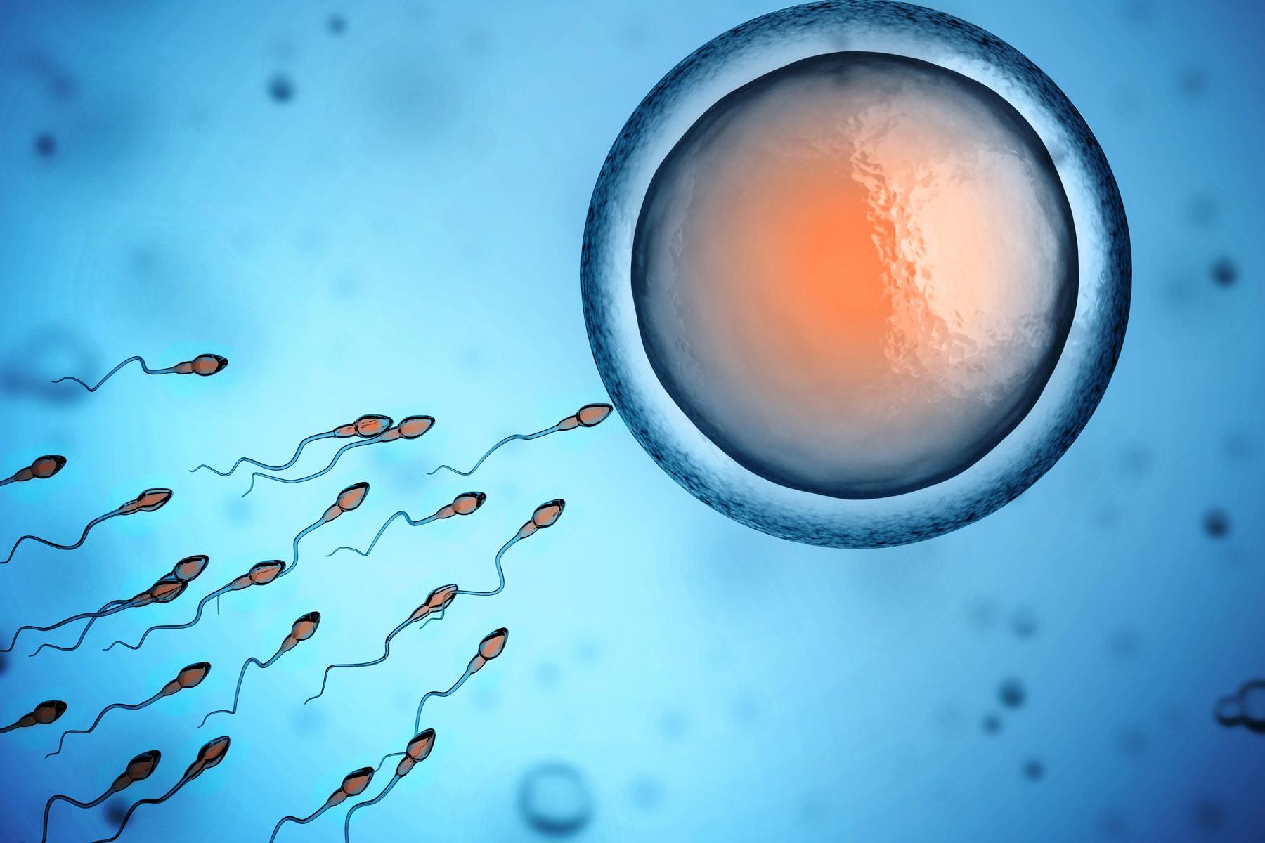 bagato-spermi
