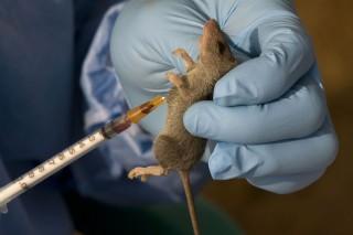 Image result for Ondo records fresh outbreak of Lassa fever