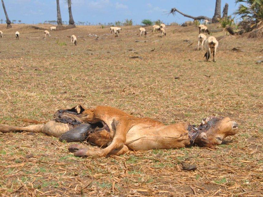 drought-in-kenya