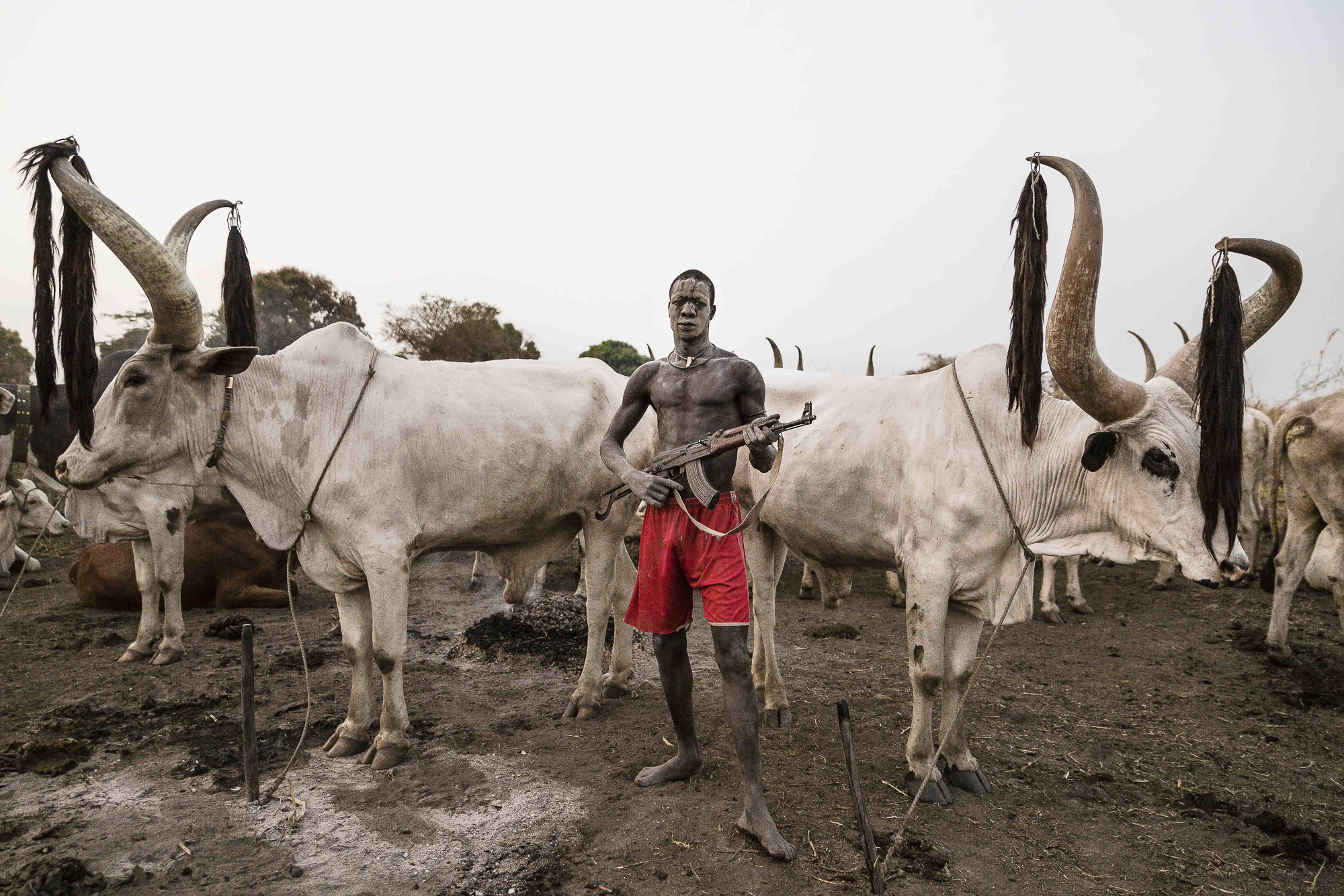 how boko haram makes its cash from stolen cattle