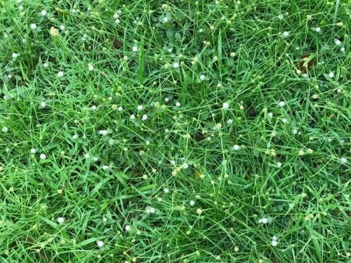 """In Nigeria, grass in golf courses get better care than citizens"" - Editi Effiong|Medium"