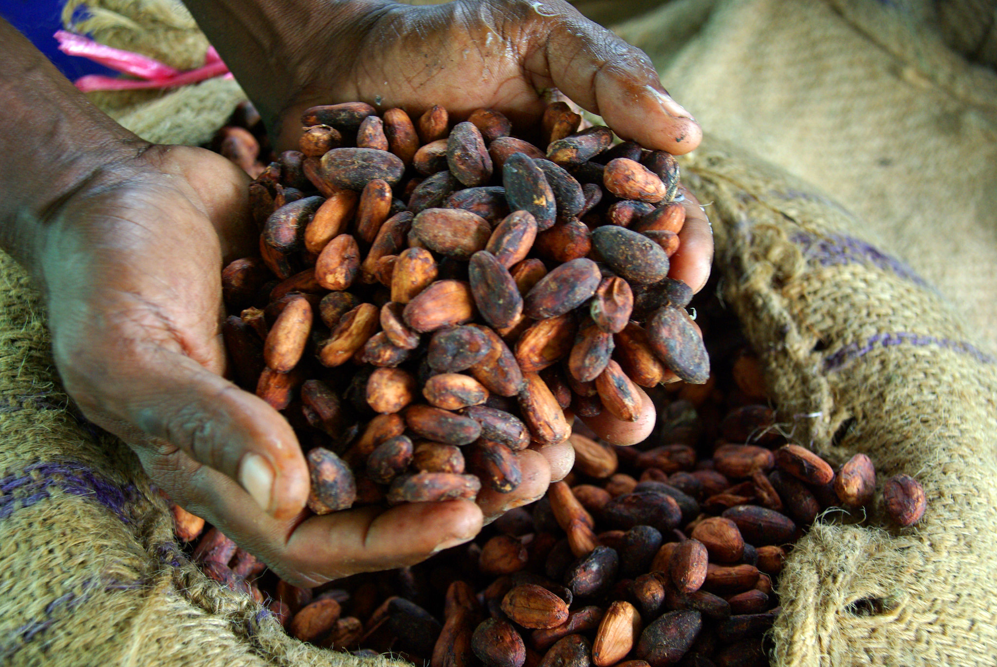 Ghana and Cote d'Ivoire push for global increase in cocoa prices - Ventures Africa